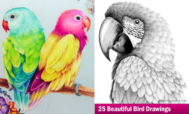 parrot closeup drawings