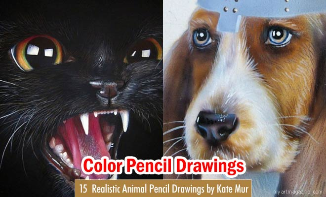 Animal Color Pencil Drawings by Kate Mur