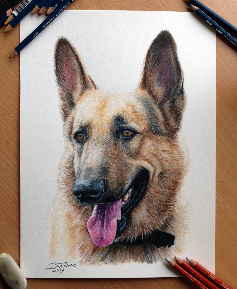 dog color pencil drawing dino