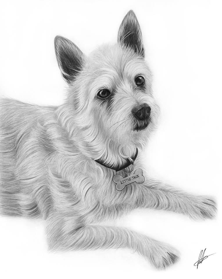 dog pencil drawing laura
