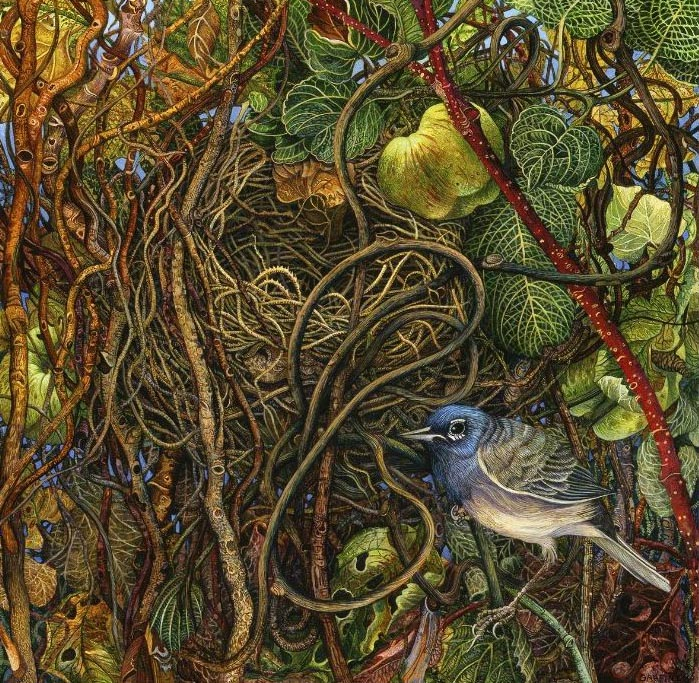 fruit illustration judy