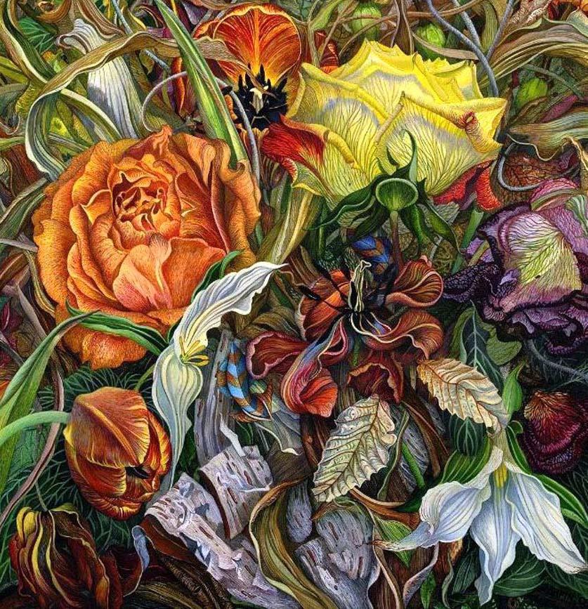 roses illustration judy