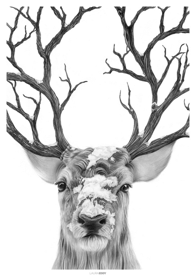 stag pencil drawing laura