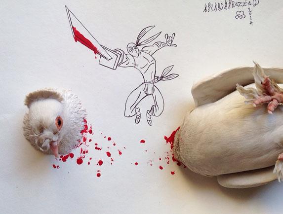 pigeon creative illustration ali