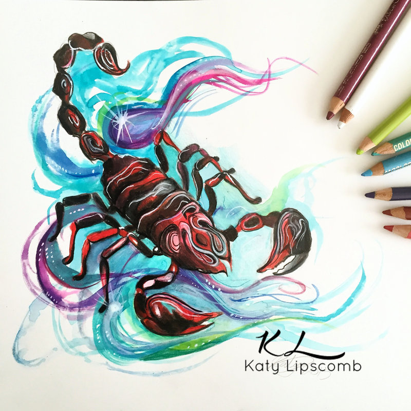 scorpio animal drawings by katy lipscomb