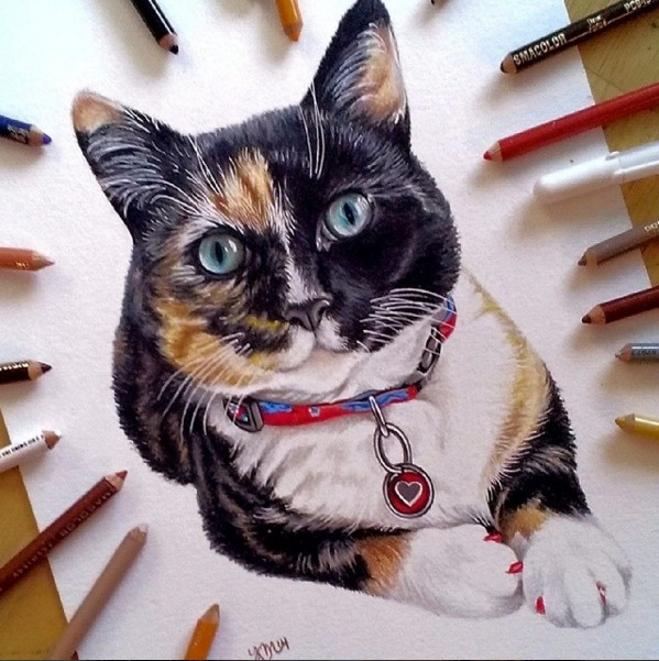 cat color pencil drawing by krystle missildine