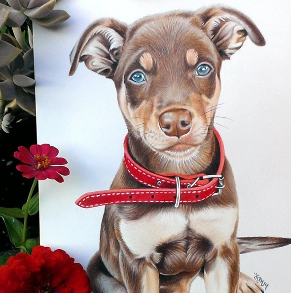color pencil drawing by krystle missildine