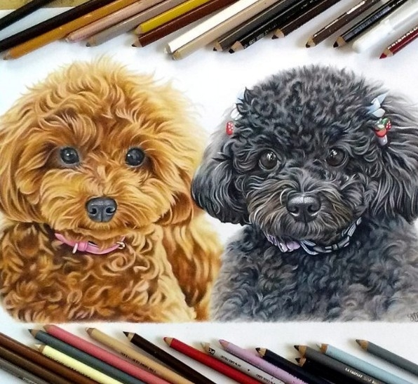 dogs color pencil drawing by krystle missildine