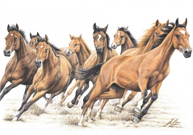 Artists That Draw Horses Drawings by German Artist