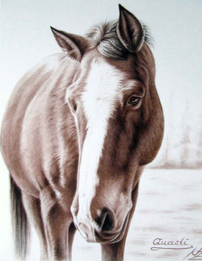 Artists That Draw Horses Horse Color Pencil Drawing