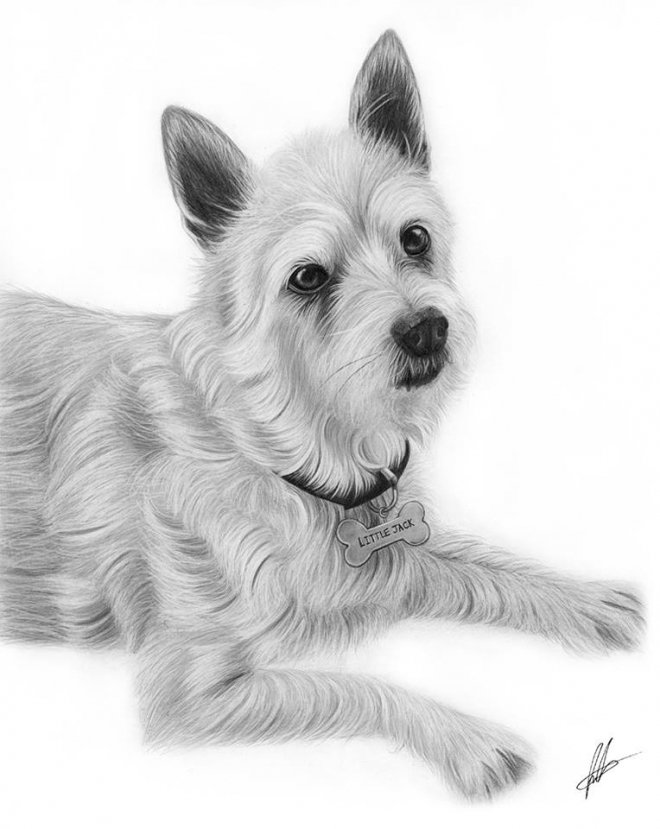 dog pencil drawing laura