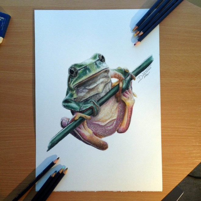 frog color pencil drawing dino