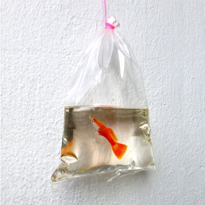 goldfish packet layer painting keng lye