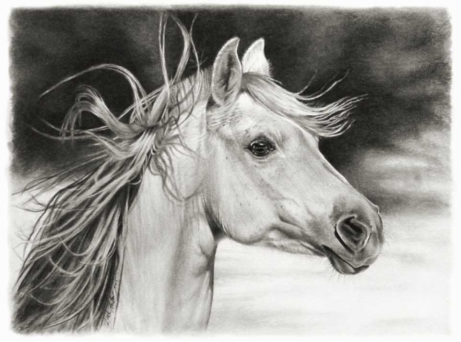 horse pencil drawing linda huber