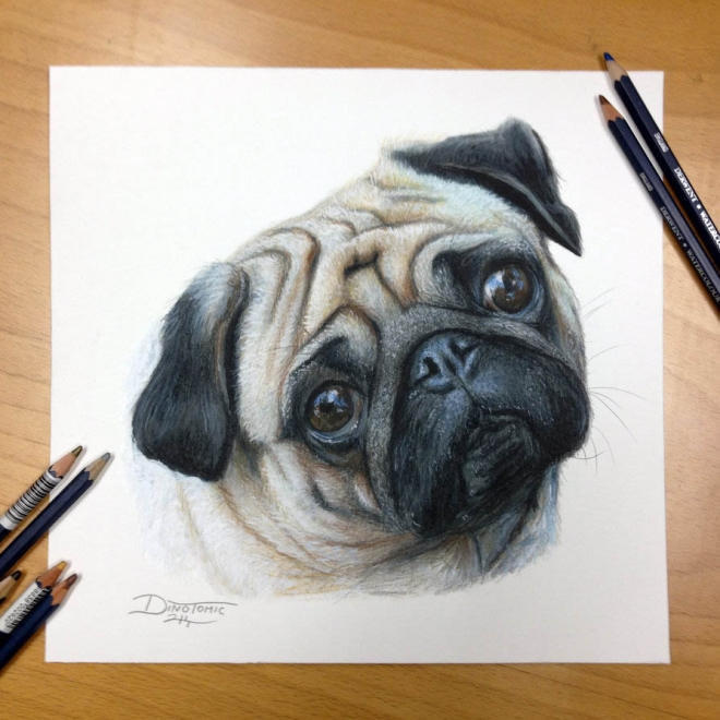pug color pencil drawing dino