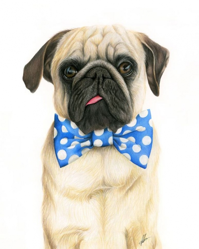 pug pencil drawing laura