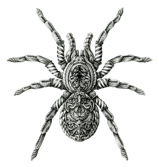 Realistic Spider Drawing Images