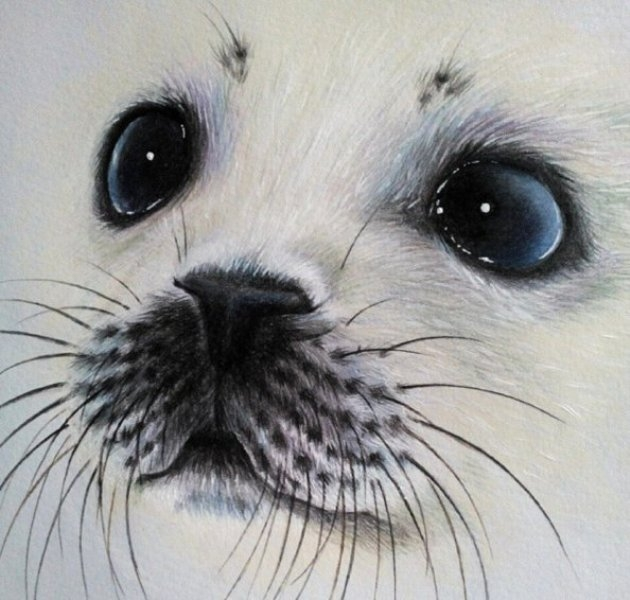 dog pencil drawing by kate mur