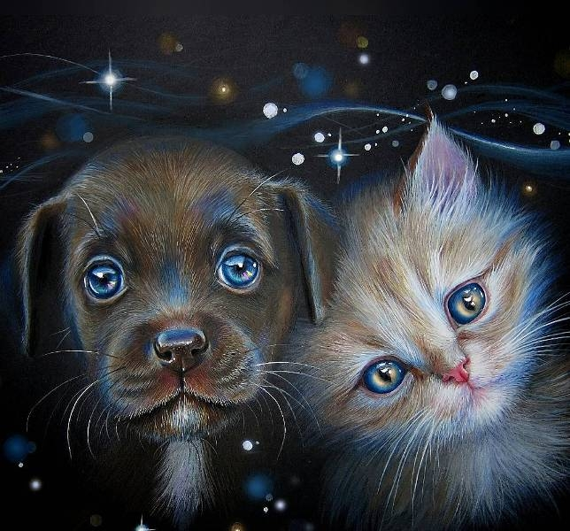 dog cat pencil drawing by kate mur