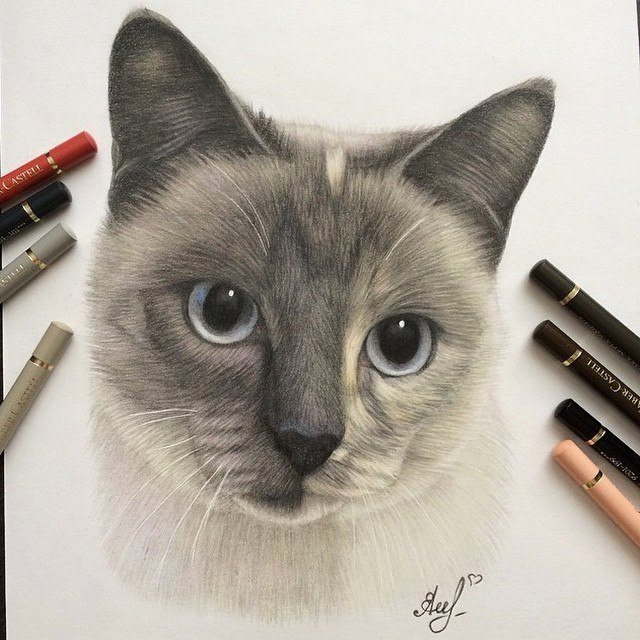 cat pencil drawing