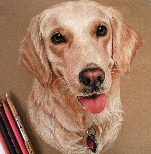 dog color pencil drawing by lahar