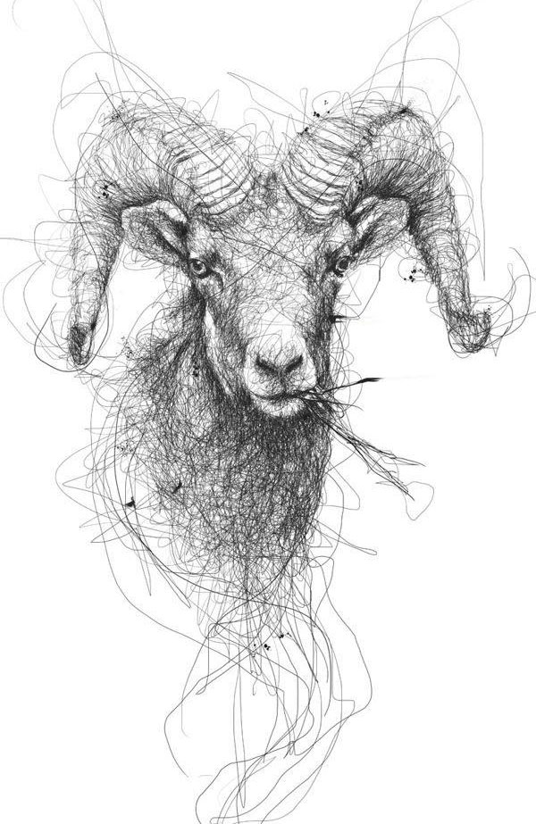 goat scribbles by vince low