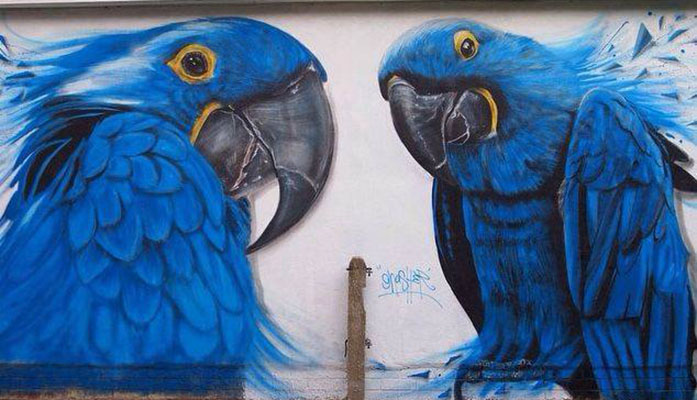 parrots street art