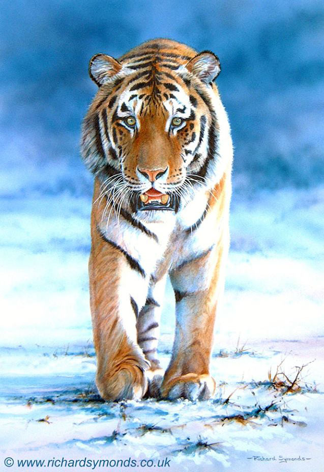 tiger painting by richard symonds