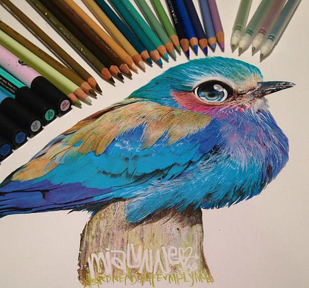 bird pencil drawing by Karla Mialynne