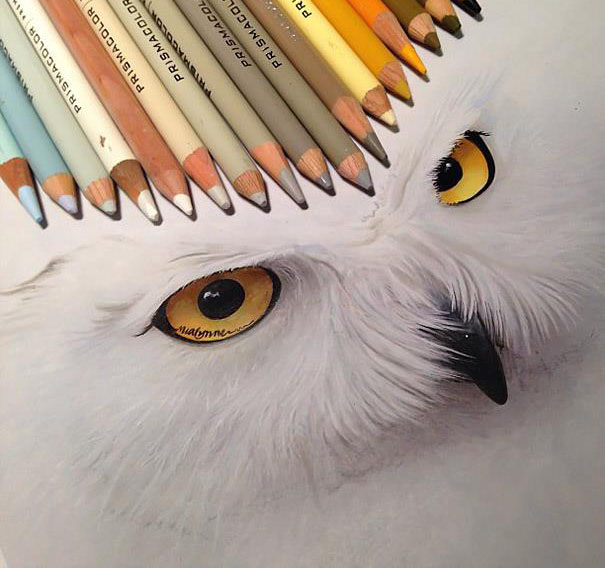 white owl pencil drawing
