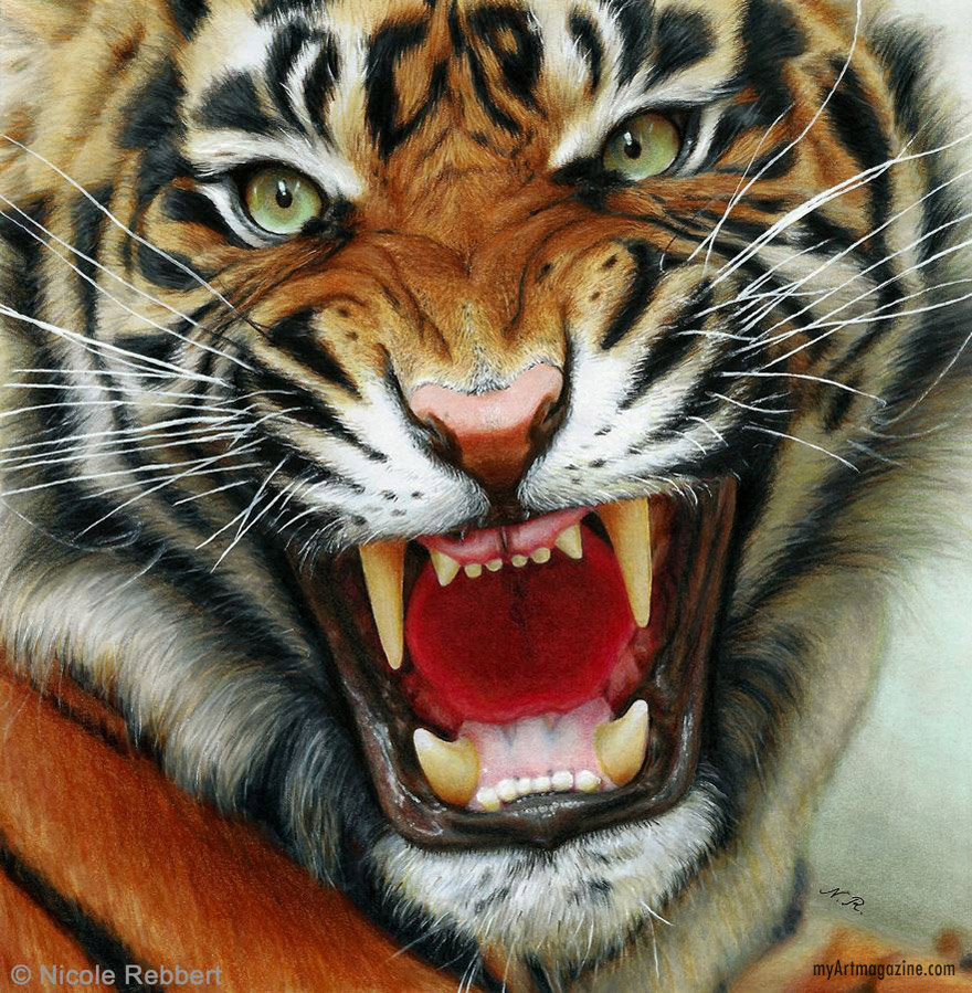 realistic drawing tiger by nicole rebbert