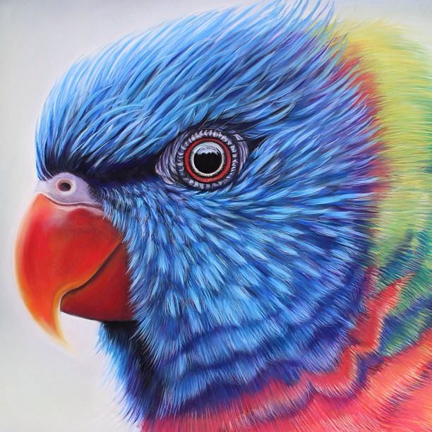parrot painting by joannebarby