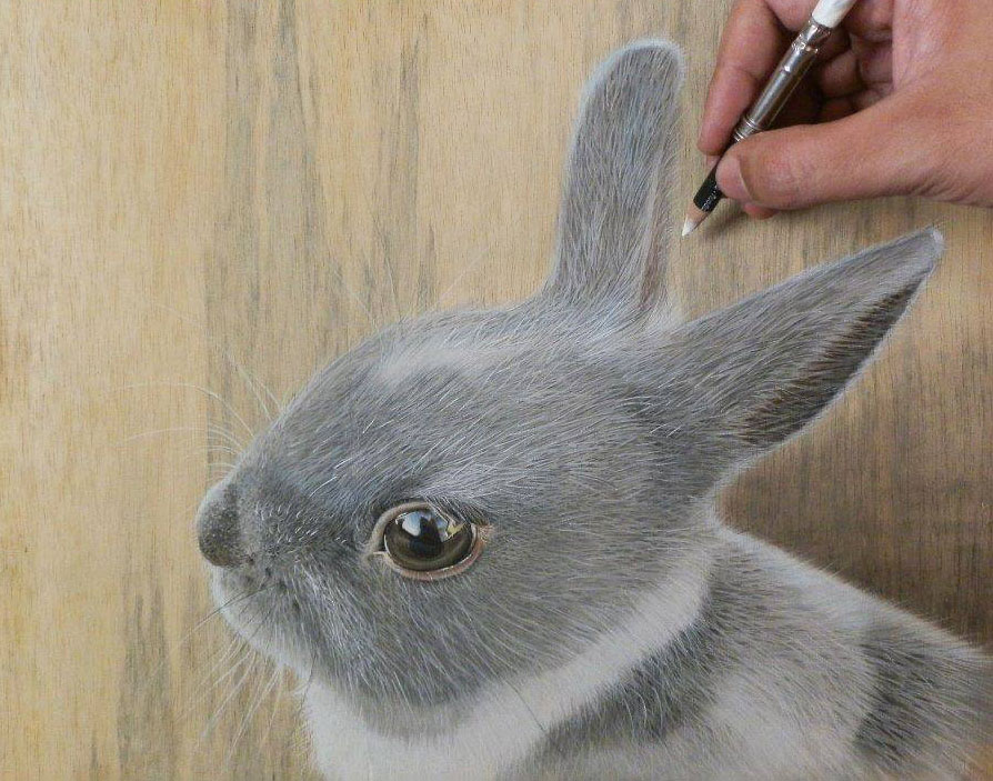 rabbit pencil drawing