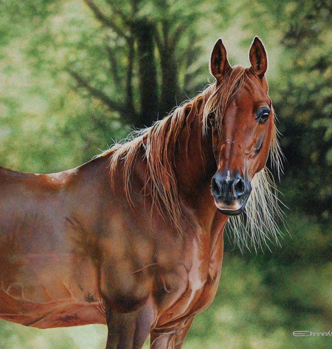 realistic horse pencil drawing by esther