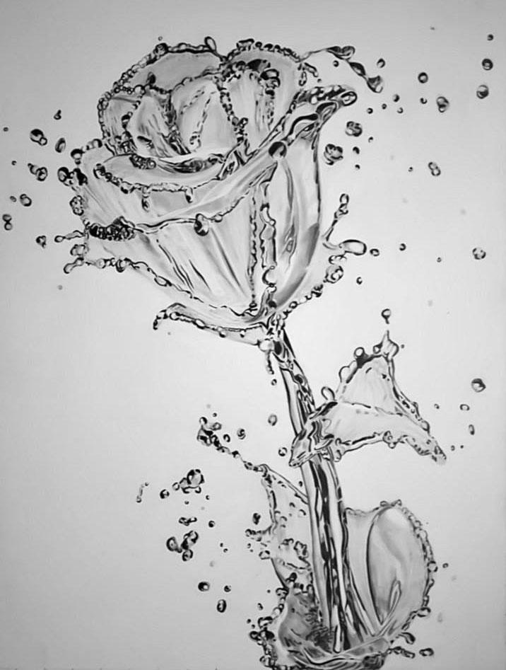 rose splash pencil drawing