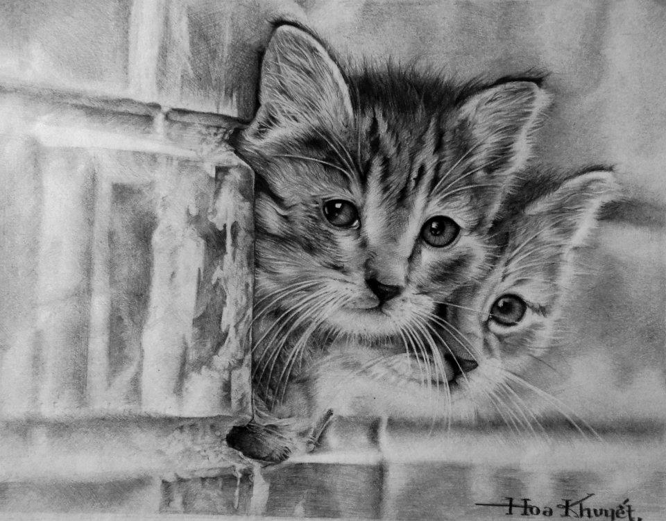 cat drawings by gattanday -  1