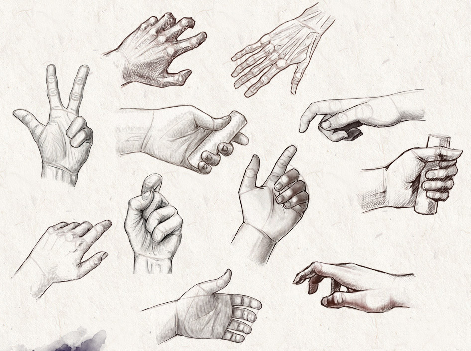 hand anatomy drawing helthenstorm -  1