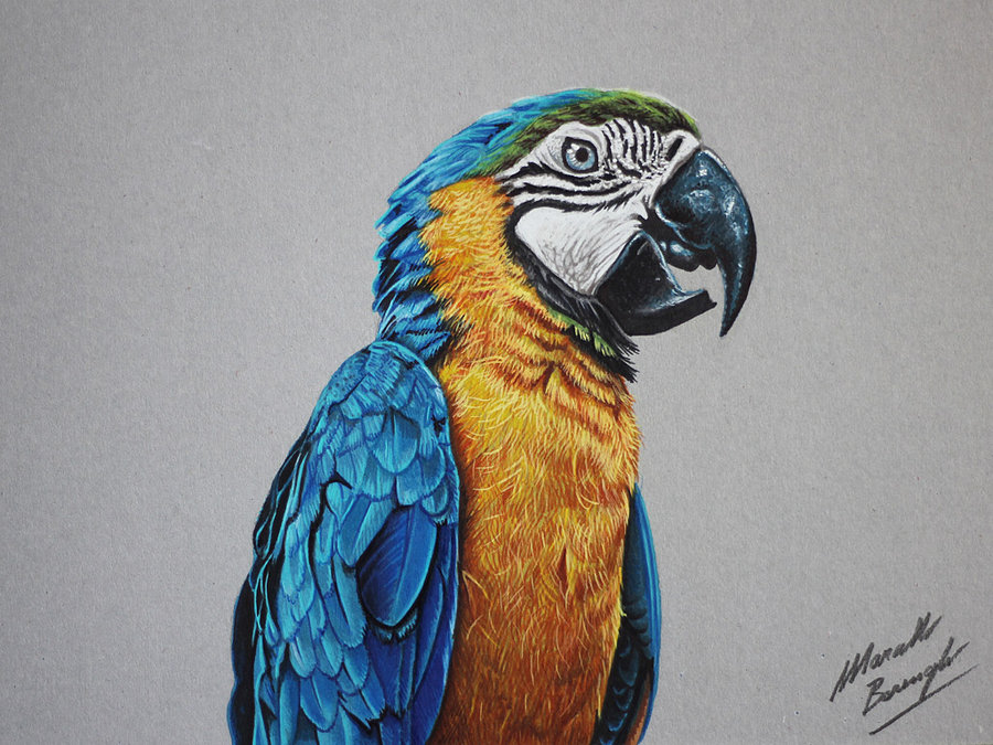 parrot drawings by marcellobarenghi