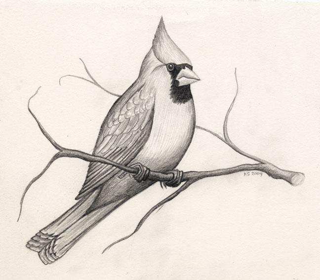 bird drawings -  11