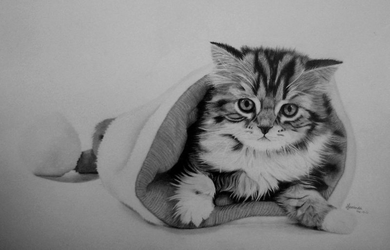 cat drawings by lintess -  12