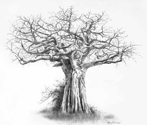 12 tree drawings