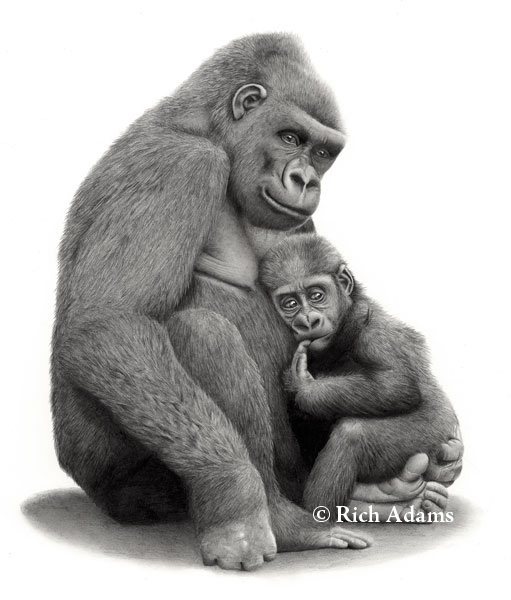 gorilla animal drawings -  13