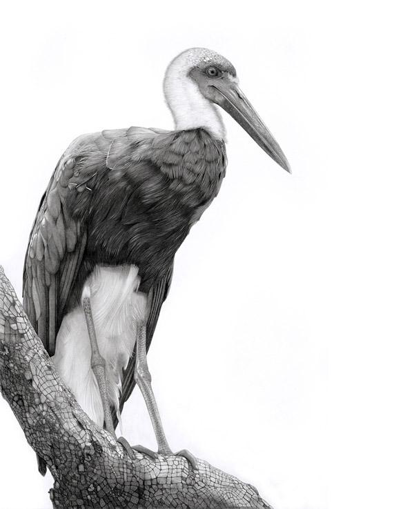 14 stork bird drawings