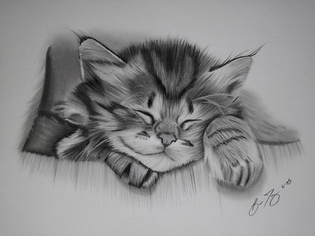 cat drawings -  15