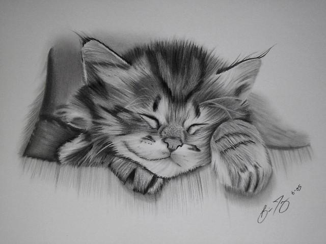 15 cat drawings