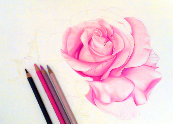 rose flower drawings -  15