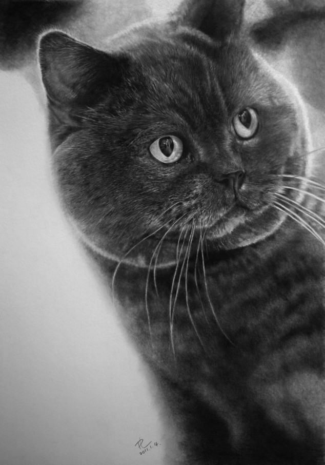 cat drawings -  16