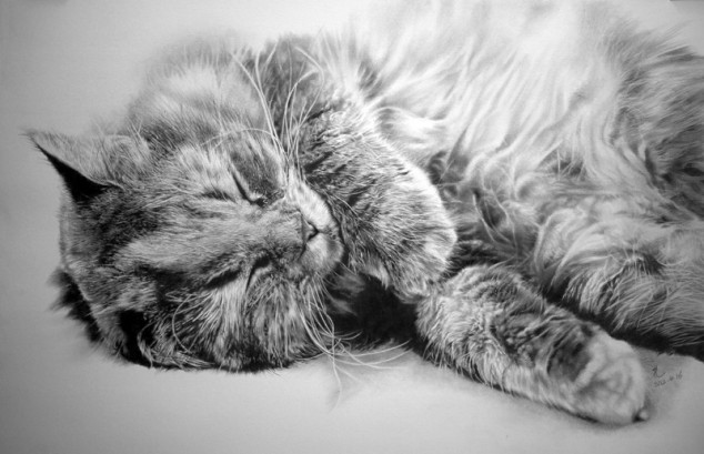 cat drawings -  19