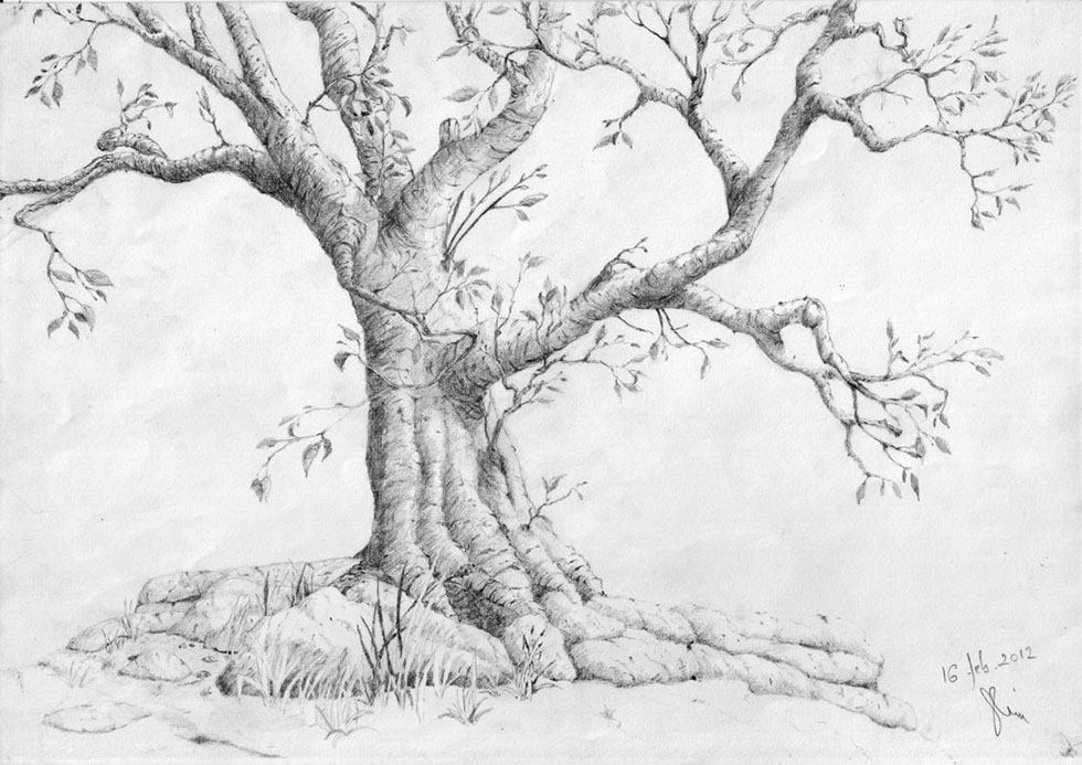 tree drawings by kathia