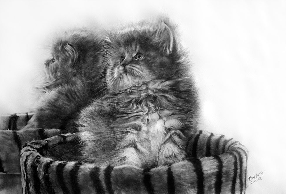 cat drawing by paullung -  2
